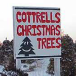 Cottrells Christmas Trees